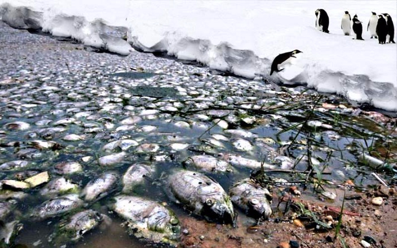Penguins polluted by seas